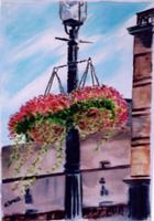 Madisons Hanging Baskets